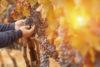 Feuillage et atmosphère d'automne en Italie
